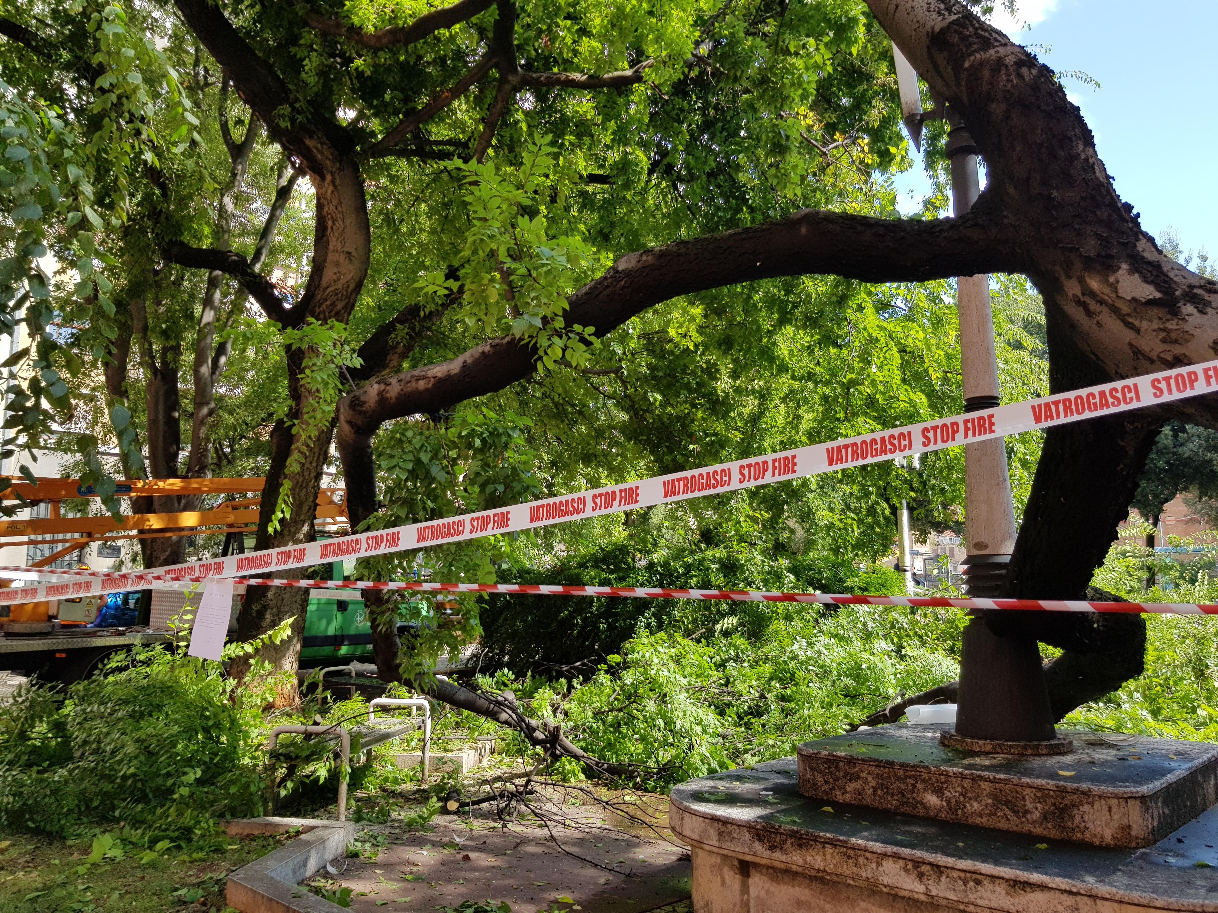 srušeno stablo u Parku dr. Vinka Frančiškovića / Snimio Marko GRACIN
