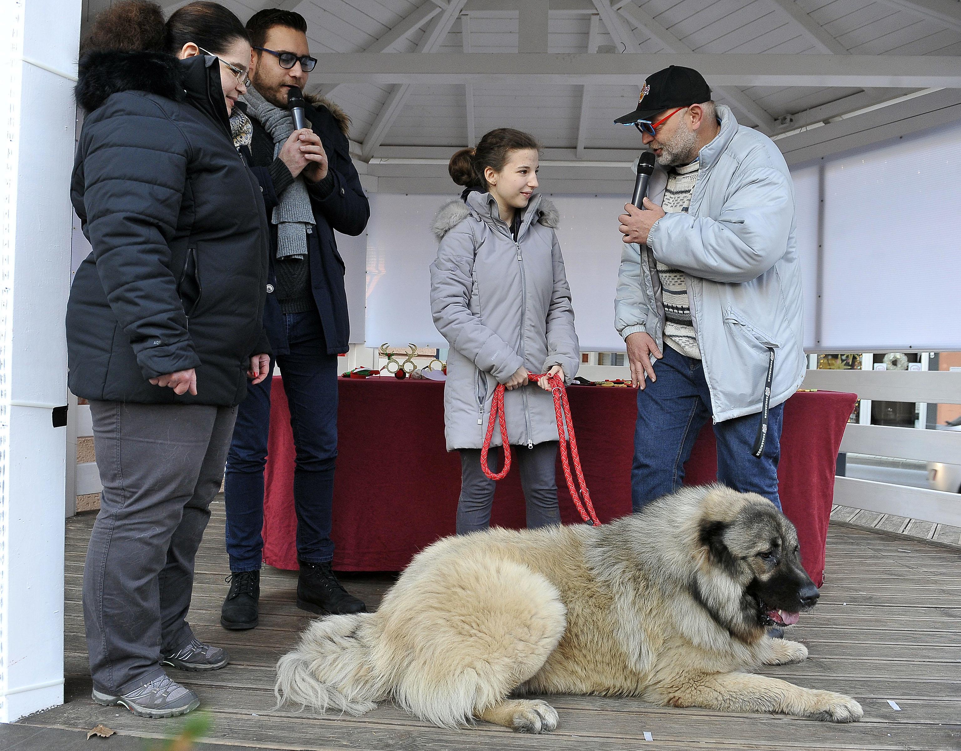 Najveću pažnju privukao je kavkaski ovčar Koda, težak 80 kilograma / Snimio Roni BRMALJ