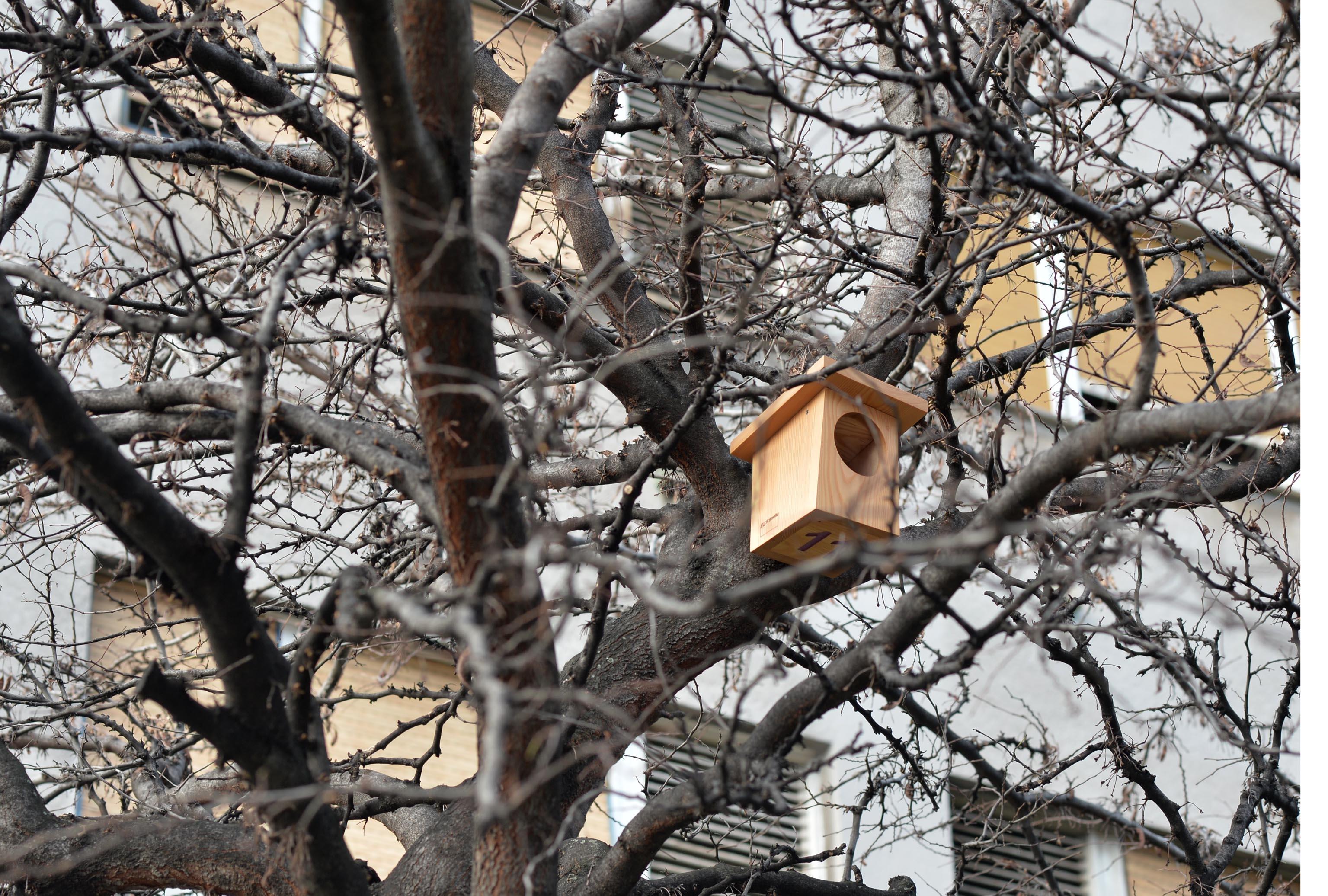 Kućica je jednostavna, ne smije biti šarena / Snimio Damir Škomrlj