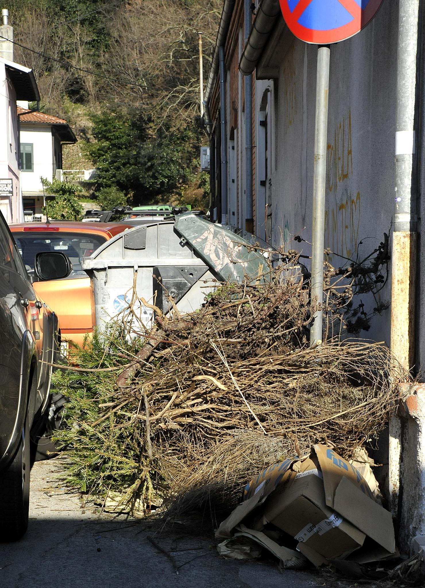 Potok- otpad iz vrtova i novogodišnje jelke / Snimio Sergej DRECHSLER