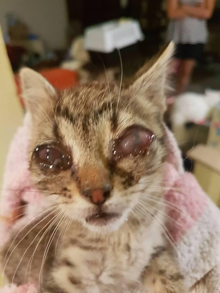 Kitten Safe House
