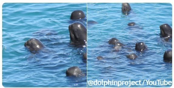 FOTO/Dolphin Project, YT Screenshot