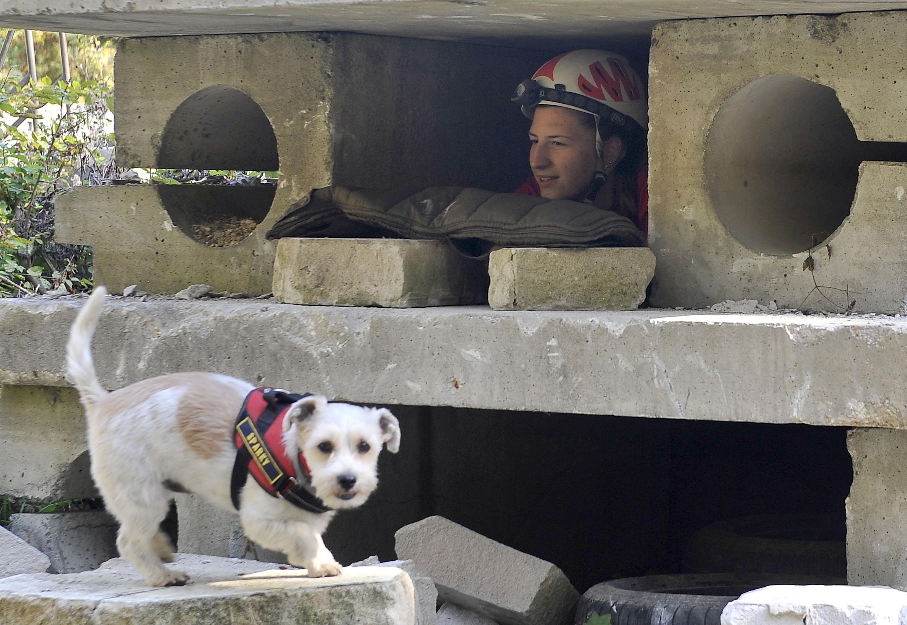 psi spasitelji, pas Sparky, DVD Kras Šapjane, vatrogasni tim K-9, snimio Vedran KARUZA