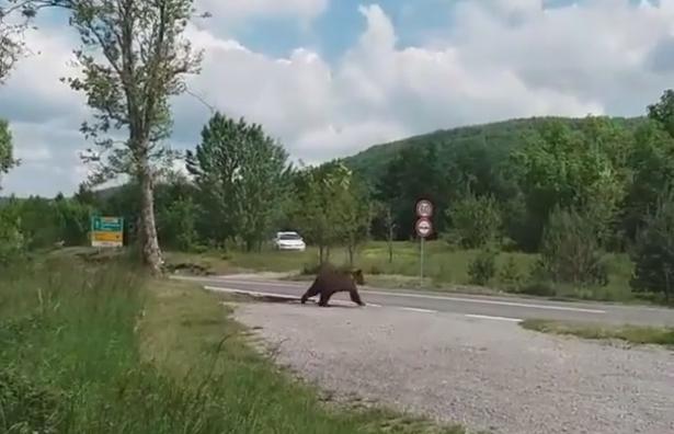 Medvjed u Rupi / Foto screenshot / Facebook / M. P.