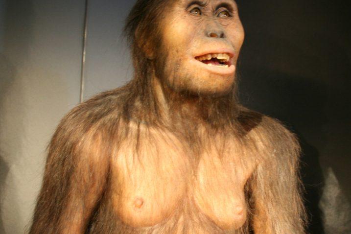 FOTO/Australopithecus afarensis, Wikimedia Commons