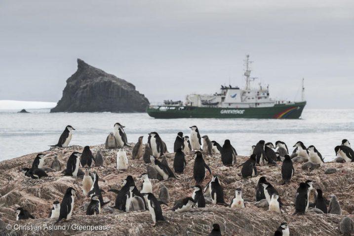 Foto Christian Aslund, Greenpeace