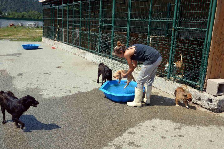 Briga o psima ima svoju cijenu, a ona je za Općinu Fužine sve teže podnošljiva / Foto Marinko KRMPOTIĆ