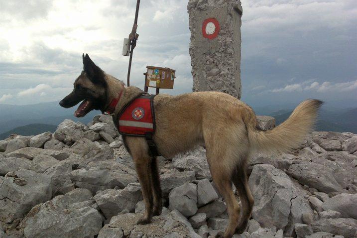 Luxa - bila je aktivna do zadnjega dana družeći se na raznim turama, pa čak i treninzima s ostalim potražnim psima / Foto HGSS