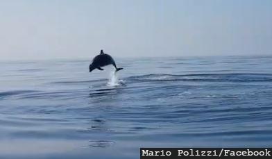 FOTO/Mario Polizzi, Facebook, Screenshot