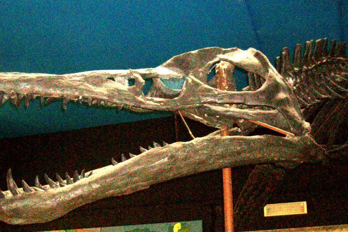FOTO/Wikimmedia Commons, čeljust Pliosaurusa feroxa