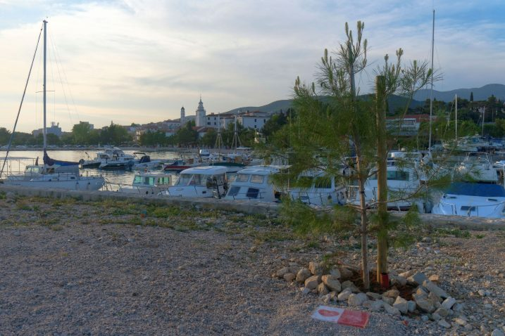 Nova šetnica uz Dubračinu biti će ozelenjena s novih 12 stabala, dok će 3 stabla biti zasađena u uvali Pazdehova