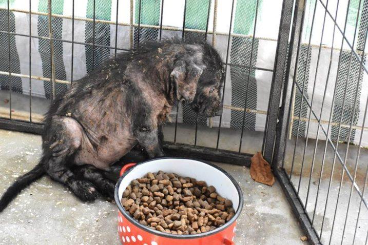 Jedan od pronađenih štenaca