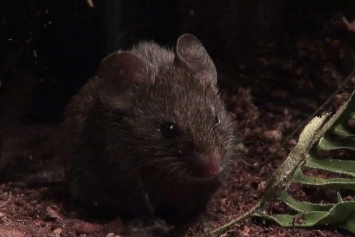 FOTO/Alston singing mice, Youtube