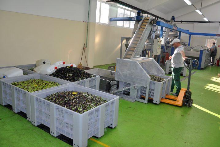 Prerada lanjske berbe rezultirala iznadprosječnim količinama, ali i kvalitetom ulja u Puntu / Snimio Mladen TRINAJSTIĆ