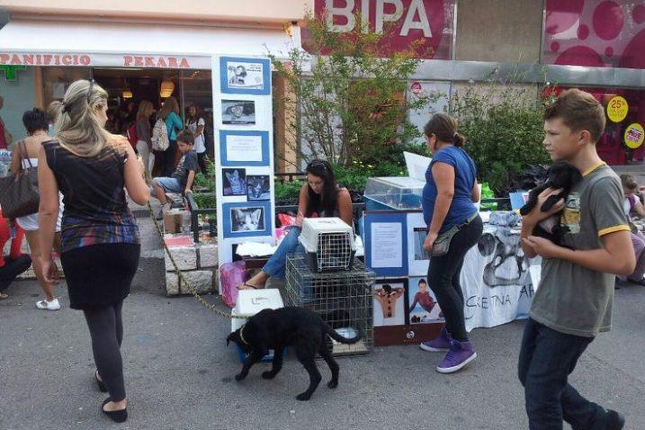 Volonteri Udruge Sretna šapa pokušavaju udomiti kojeg ljubimca, a poželjne su i donacije