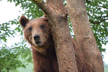 Kuterevo - utočište za medvjede
