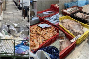 Riječka ribarnica ove je nedjelja bila pusta / Foto: I. TOMIĆ