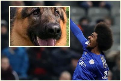 Hamza Choudhury izdvojio je pravo bogatstvo za psa čuvara