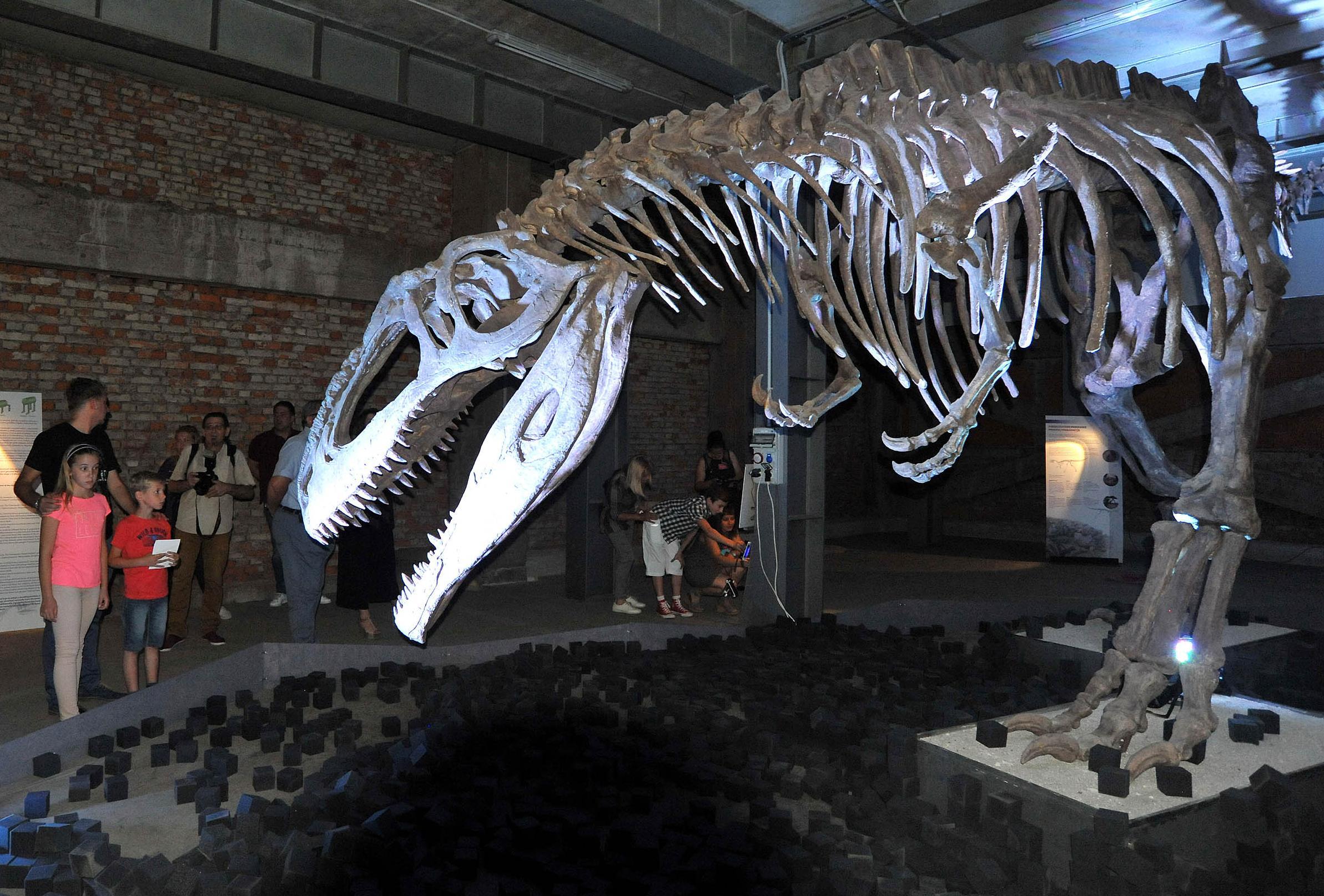 Dinosauri se u skladištu bivšeg Exportdrva na Delti mogu pogledati sve do kraja veljače 2017. godine /Snimio Sergej DRECHSLER