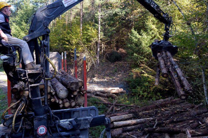 Zbog potkornjaka ove godine posječeno 306 tisuća kubika šume u Gorskom kotaru / Foto Damir ŠKOMRLJ