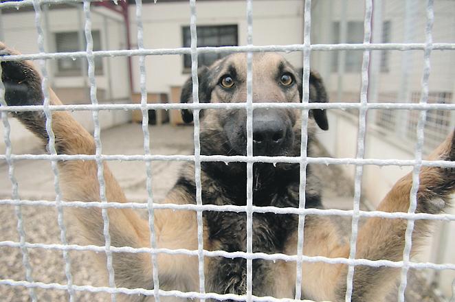 Ilustracija psa (ne prikazuje psa iz članka) / Foto arhiva NL