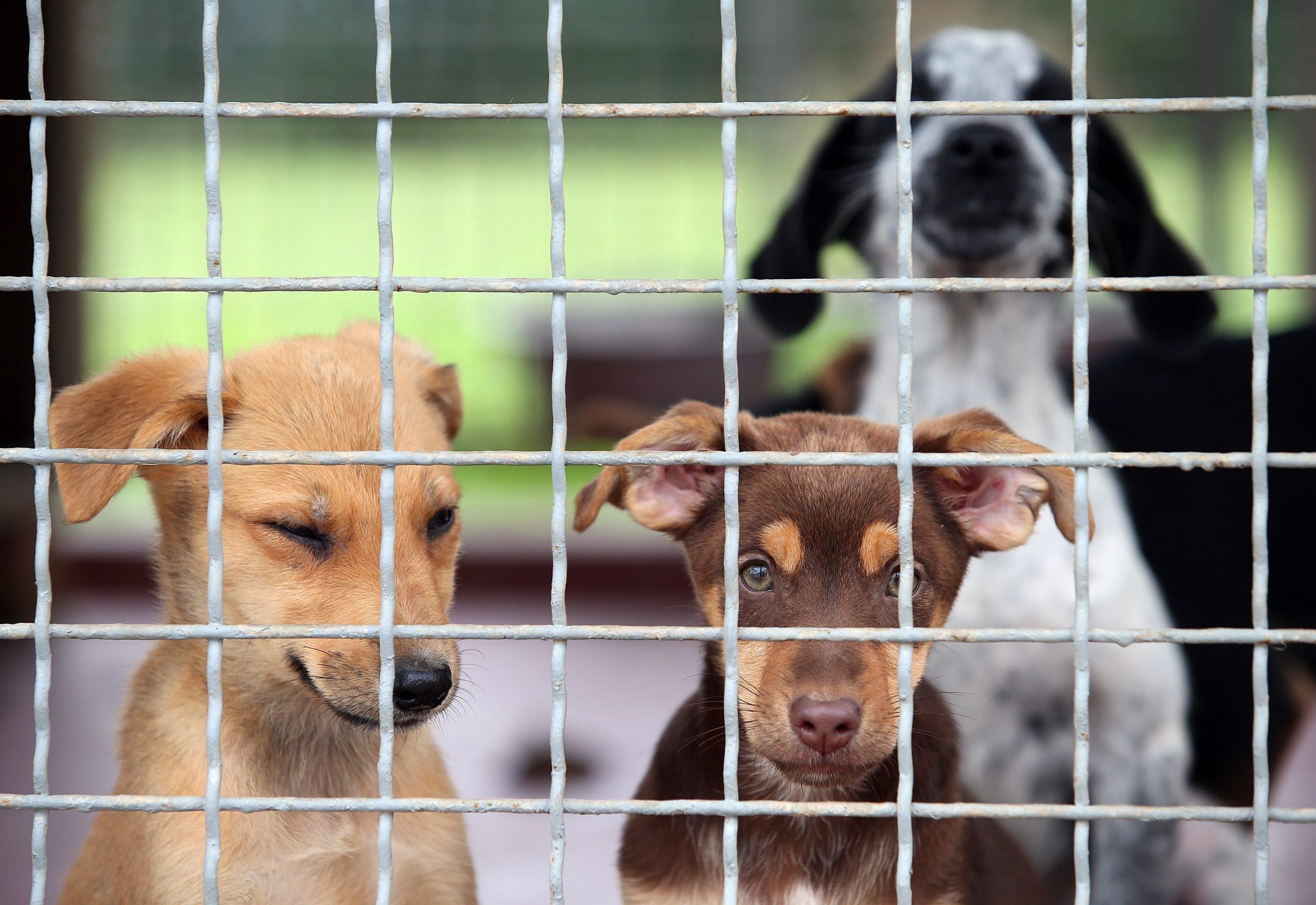 Ilustracija (ne prikazuje pse iz teksta) / Foto Pixsell