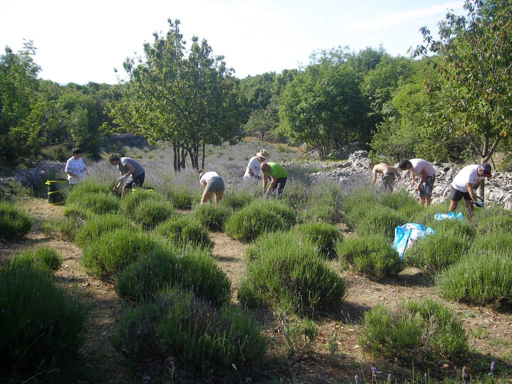 Više od tisuću biljaka posađeno je u terasastim vrtovima / foto WALTER SALKOVIĆ