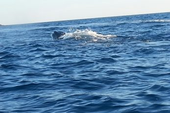 Ilustracija (ne prikazuje kitove iz članka) / Foto arhiva
