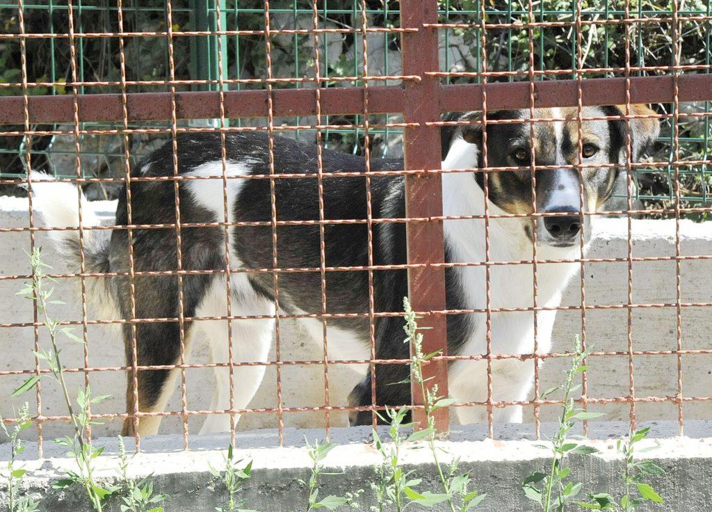 Azil za pse 'Društvo za zaštitu životinja Rijeka' / Snimio Sergej DRECHSLER