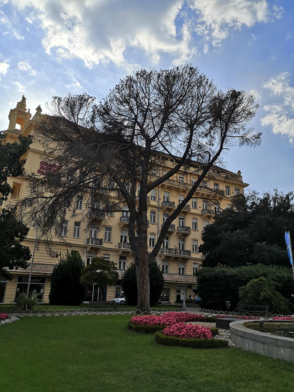 Pinija koja se osušila u parku na Slatini / Foto A. KUĆEL-ILIĆ