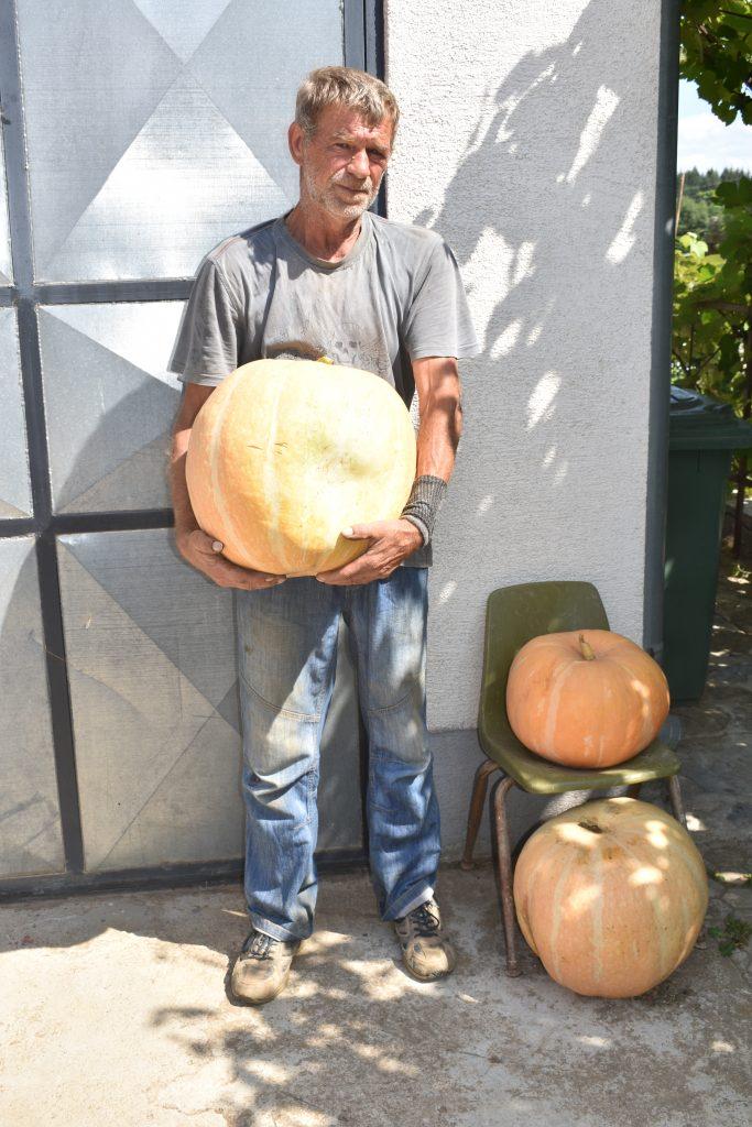Golema bundeva uzgojena u Smiljanu