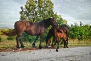 Konji lutalice u Lici