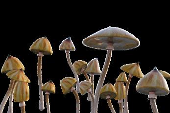 Foto: Pixabay
