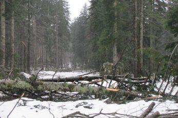 Tijekom posljednjih šest godina goranski šumari uglavnom su se bavili sanacijom šume stradale od raznih elementarnih nepogoda / Foto Š. KAUZLARIĆ