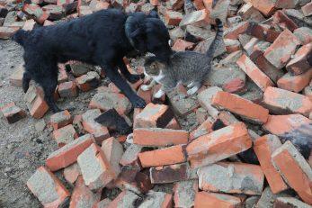 Pas i mačka u potresom razrušenoj Petrinji