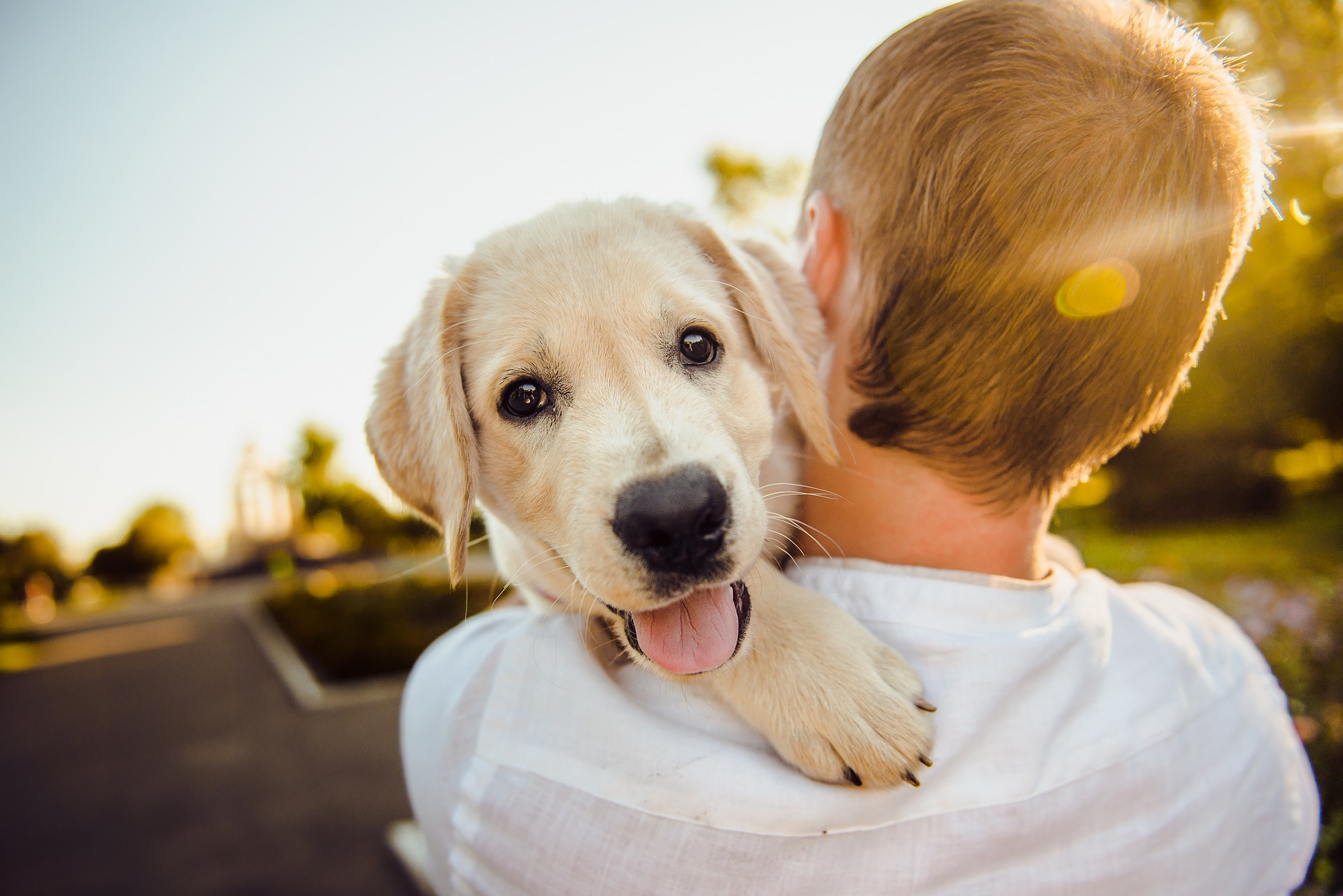 Ilustracija (ne prikazuje psa Bucka) / Image by Helena Sushitskaya from Pixabay