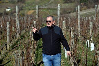 Od jutra, Vladi Krauthakeru su pred očima loza i vinograd / Snimio Davor KOVAČEVIĆ