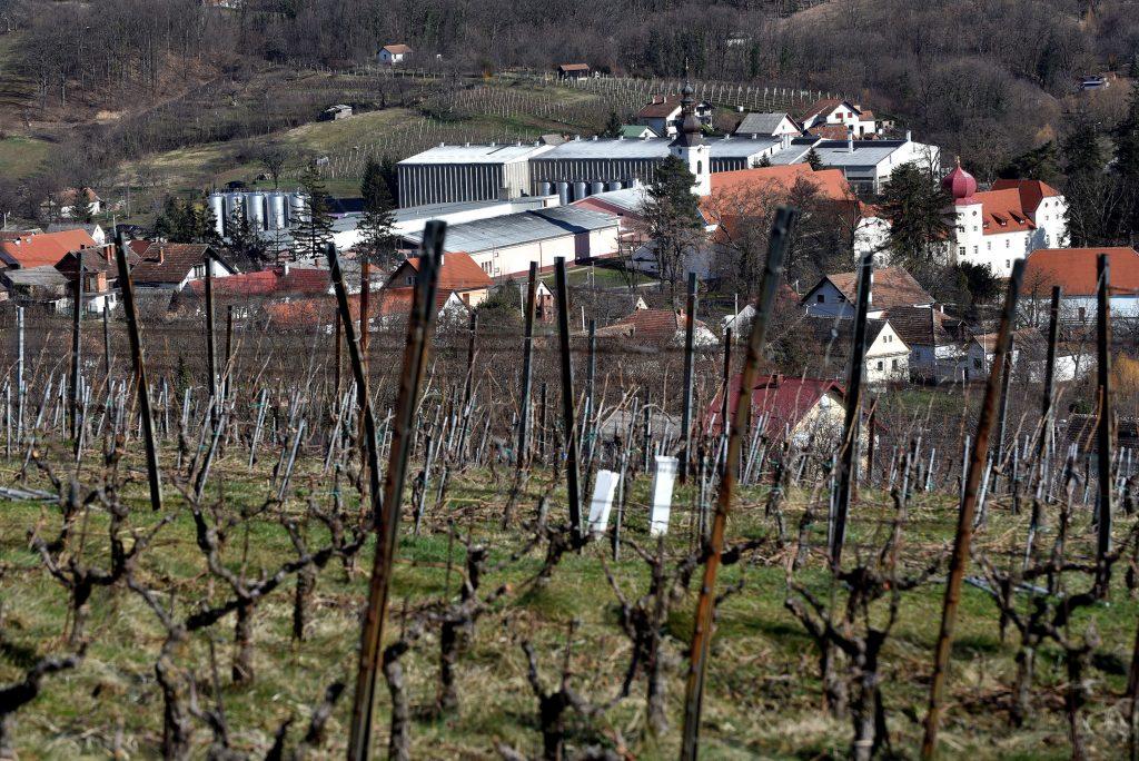 Kutjevački vinogradi / Snimio Davor KOVAČEVIĆ
