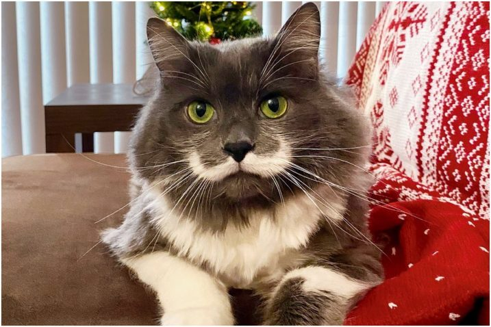 FOTO/Instagram @hamilton_the_hipster_cat Verified