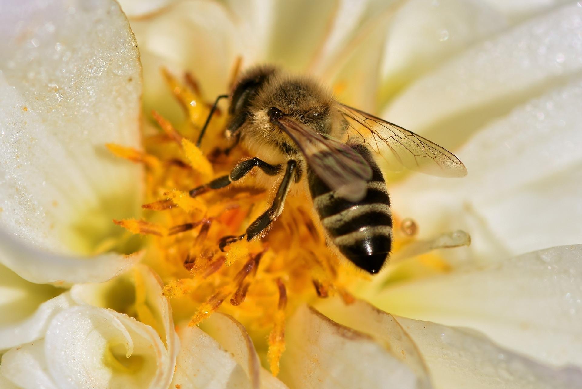 Pčele život znače