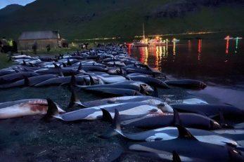 Foto Sea Shepherd