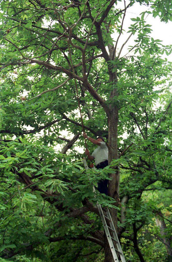 Vlasnici šuma maruna su na velikim mukama / NL arhiva